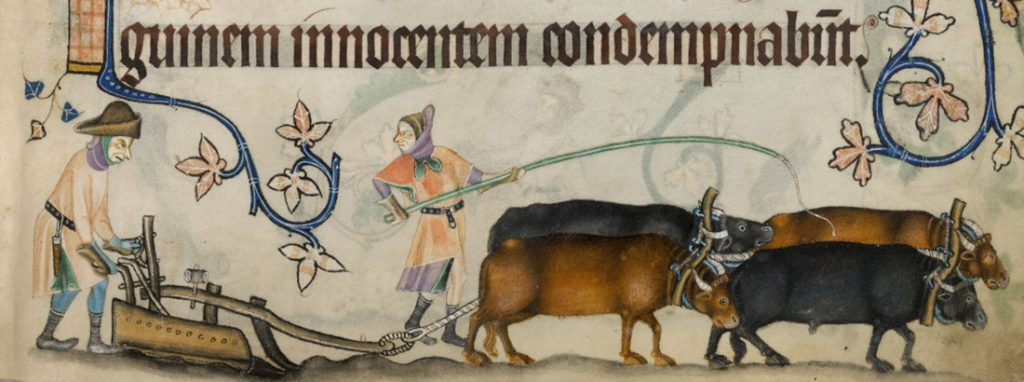 Farmers and oxen pulling a plow in medieval England